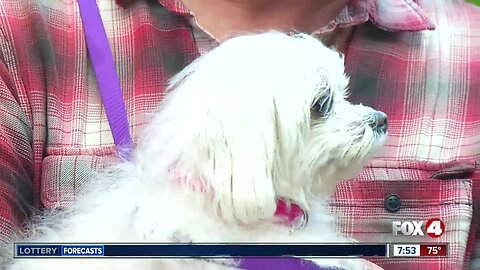 Pet of the Week: Sheila