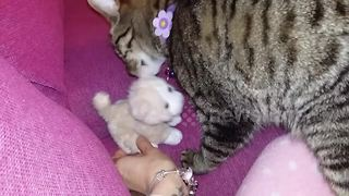 Cat thinks kitten teddy is her real baby