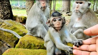 Tarzana Become Big Baby Monkey Now Come To See Me - Video