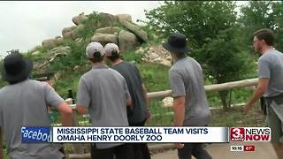 Mississippi State baseball team visits Omaha Zoo - Video
