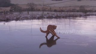 Hilarious moment a cat wanders onto frozen pond in the UK - Video