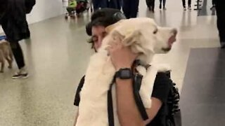 Man and his dog's touching airport reunion