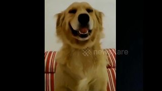 Owner Tells Guilty Dog To Smile, Pooch Gladly Obliges - Video