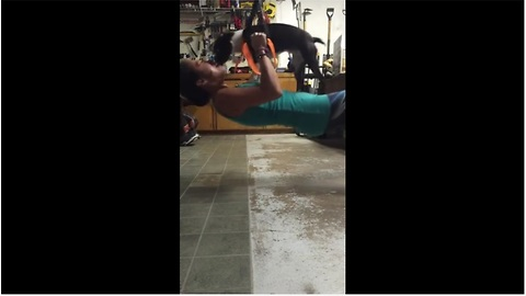 "Stubborn puppy ""joins"" owner's workout"
