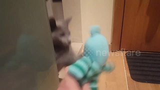 Kitten plays peek-a-boo with teddy bear
