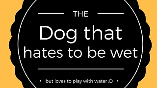 Dog loves water, but hates being wet! - Video