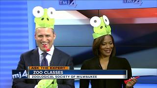 Ask the Expert: Winter classes at the zoo - Video