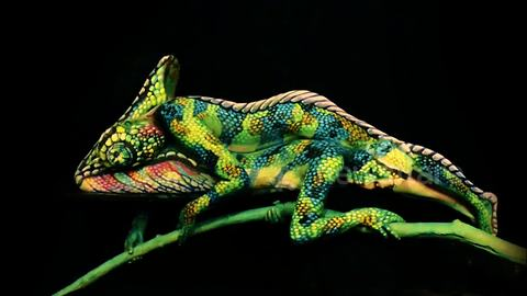 This 'chameleon' is actually two painted women lying on top of each other