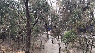 Trucks Drive Over Flooded Highway at Euroa - Video