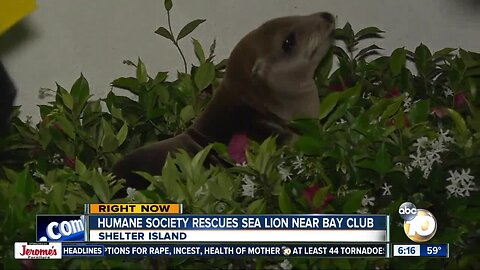 Sea lion lies down in front of San Diego hotel's sign, refuses to budge