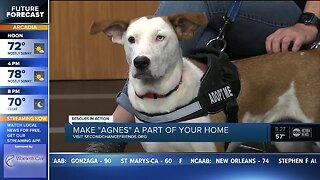 Rescues in Action Feb. 9 | Agnes needs forever home