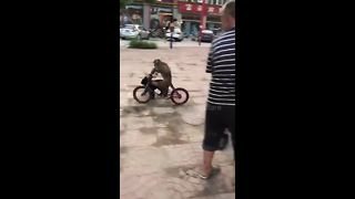 Cheeky Monkey Skillfully Rides Bike In Public Square - Video