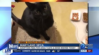 Good morning from the Maryland SPCA!