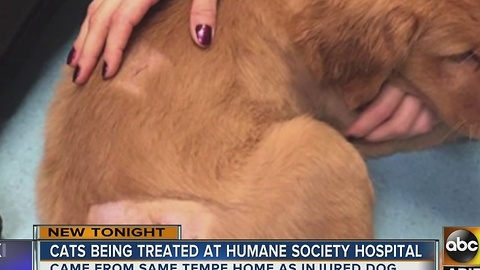 Puppy recovering in foster home after beaten by Tempe man