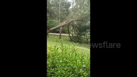 Moment tree snaps in half, tearing down power lines