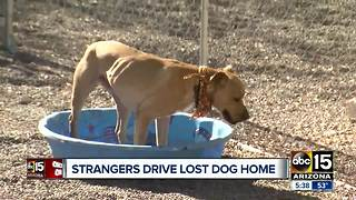 Strangers giving lost dog a ride home to Nebraska - Video