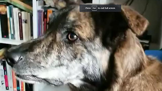 Dog reacts to owner's persistence with sticky tape - Video