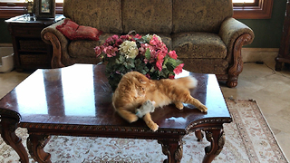 Funny Cat Plays Catch With His Toy Mouse  - Video