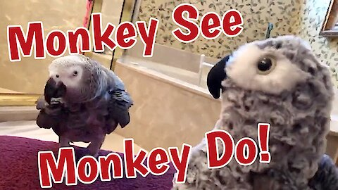 "Parrot plays game of ""monkey see, monkey do"""