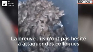 Raw Footage Leaks From Paris: Video Shows Rat Infestation France Is Trying To Keep Quiet