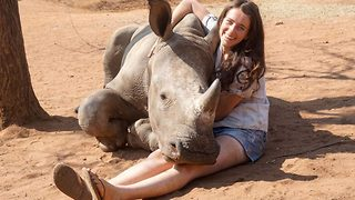 Needy rhino attempts to sit on woman's lap for cuddle and tickle - Video