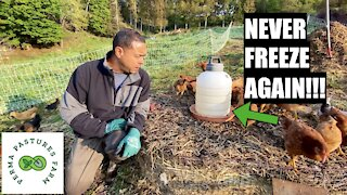 Tips And Tricks: Raising Chickens
