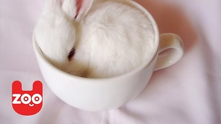 Rabbit Cafe in Japan - Video