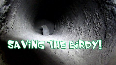 Saving A Bird Stuck In A Stove Pipe