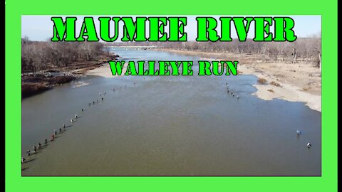Maumee River Walleye Run