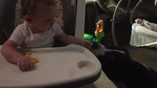 Thoughtful baby lovingly shares snack with pit bull - Video