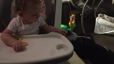 Thoughtful baby lovingly shares snack with pit bull