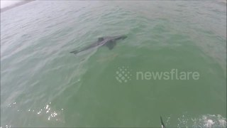 Paddle Boarders Have Close Encounter With Great White Shark - Video