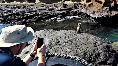 Lonely little penguin discovered on this famous Galapagos Island