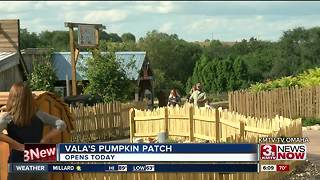 Vala's Pumpkin Patch opens Sept. 15 - Video