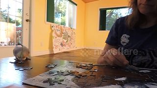 Cockatiel helps owner with puzzle - Video