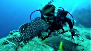 Scuba divers meet the most affectionate fish in the Galapagos Islands