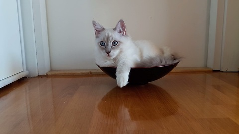Cat prefers sitting in bowls to cardboard boxes