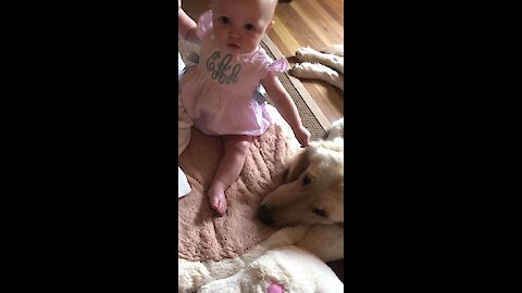 Adorably baby girl gently tugs on Golden Retriever's ear