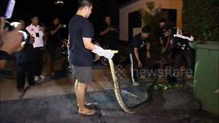 15ft long python caught after hiding in garden hedge - Video