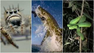 Are you afraid of the world's most dangerous animals?