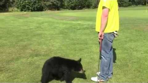 Friendly Bear Cub Walks Across Golf Course To Give Man A Hug