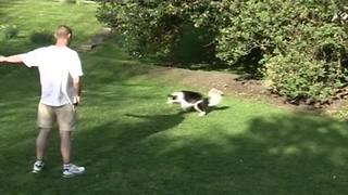 """""""Funny Dog Chases After Owner's Shadow"""""""