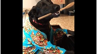Dog eager to help out in the kitchen