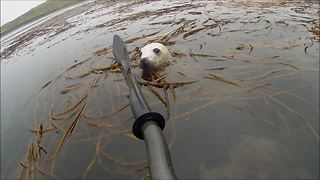 Man On Kayak Has Amazing Seal Pup Encounter In Scotland