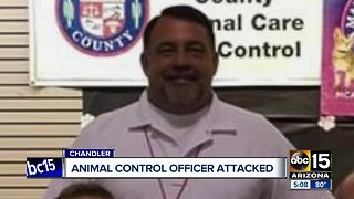 Animal control officer attacked in Chandler, dog shot and killed - Video