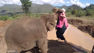 Baby Elephant Pushes Girl Into Watering Hole! - Video