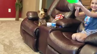 Cute Dog Loves Playing With A Balloon