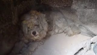 Injured dog found in burned house after fire in Greece