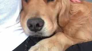 Sleepy Pup is The Most Relaxed Dog Ever - Video