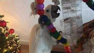 Clever Cockatoo Solves a Tricky Puzzle - Video